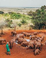 africa trip elephant orphanage pond area