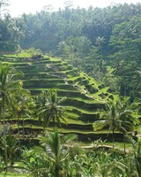 travel-honeymoon-diaries-rice-terraces-in-bali-s112955.jpg