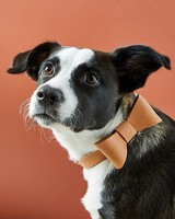 pet gift guide anthropologie leather bow tie collar