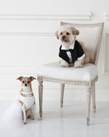 wedding-pet-clothes-mspets-wedding-bride-and-groom2-0515.jpg