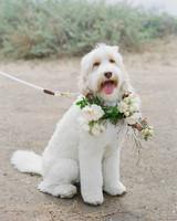 Emma mike California wedding Corbin gurkin dog