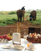 honeymoons camp elephants