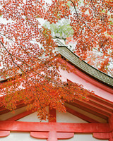 addie richard wedding japan japanese maples temple