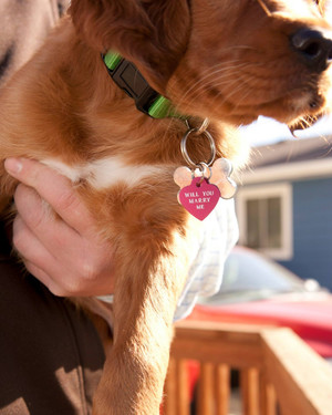"5 Pets That Had a ""Paw"" in Their Owners' Proposals"