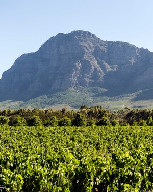 A Honeymooner's Guide to the World's Best Wine Regions
