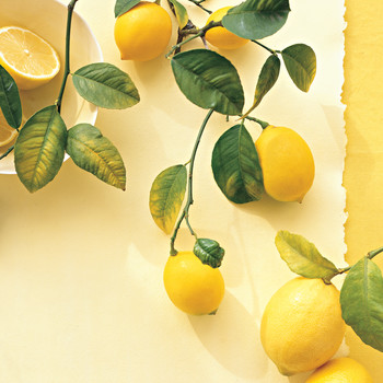 Sparkling Ginger Lemonade