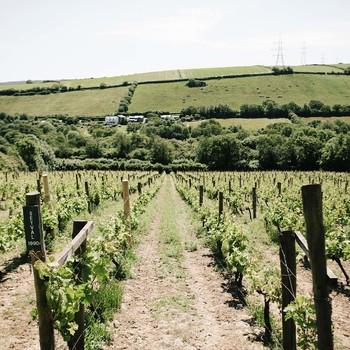 Camel Valley Vineyard