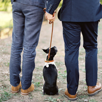 dog wedding leash grooms suits feet