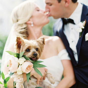 dog wedding bride groom kiss couple puppy bouquet