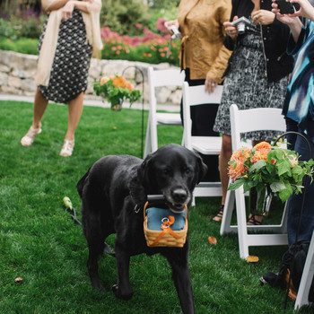 5 Things You Need to Know If You Want Your Pet to Be the Ring Bearer at Your Wedding