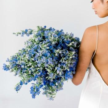 blue bouquet josh dana fernandez mibellarosa