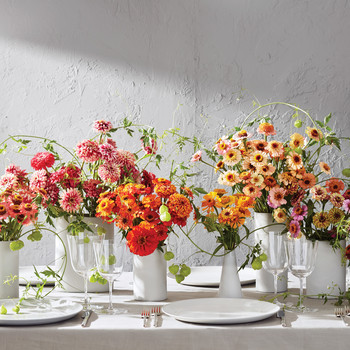 Vases of Assorted Zinnias and Scabiosas