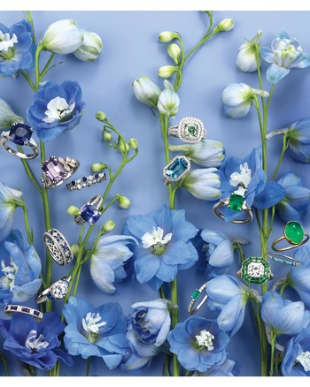mblue-violet-stock-0253-focus-d112653-blue-gree-rings-on-flowers.jpg