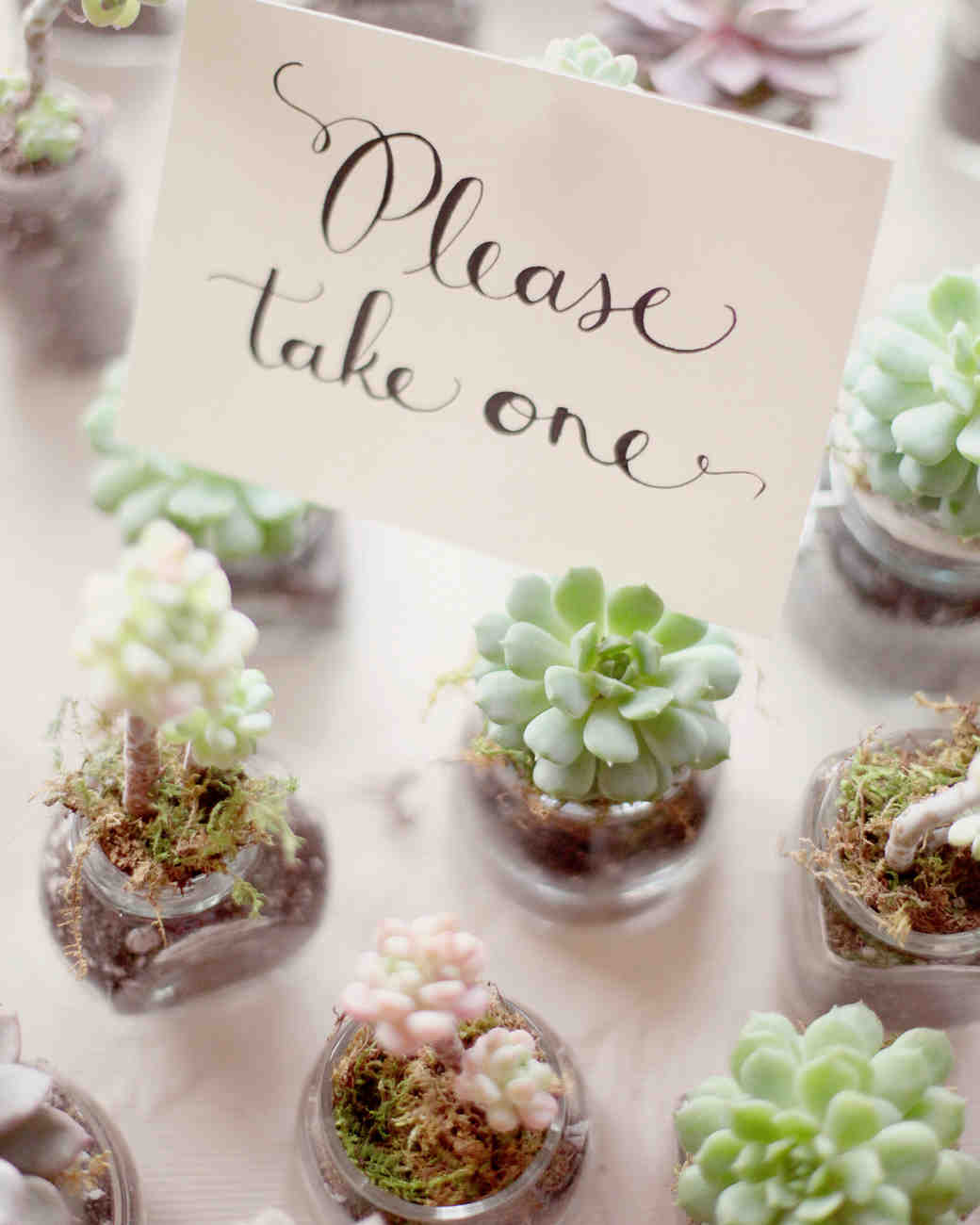 36 Ideas For Using Succulents At Your Wedding Martha Weddings