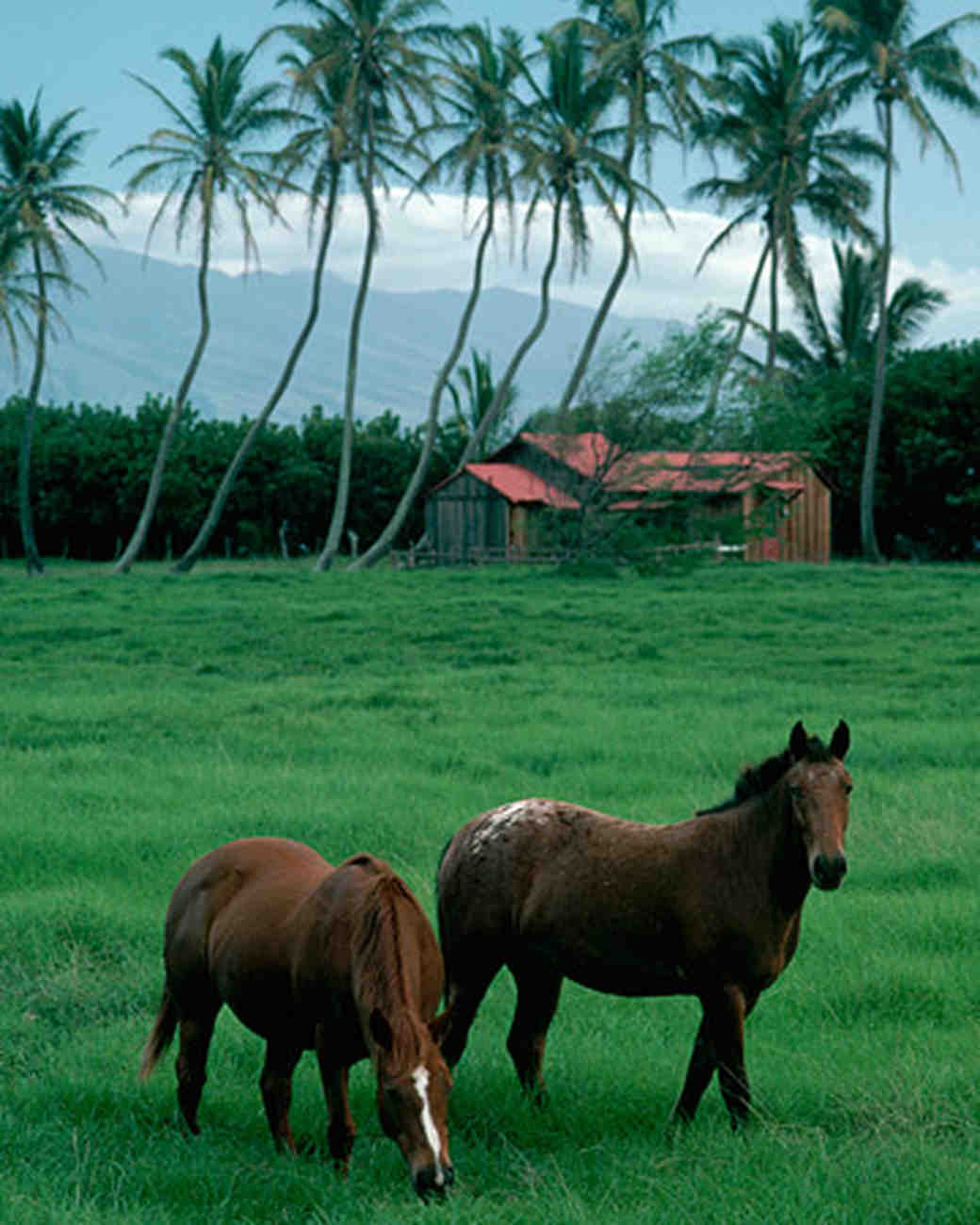 ws1166_win06_horses.jpg