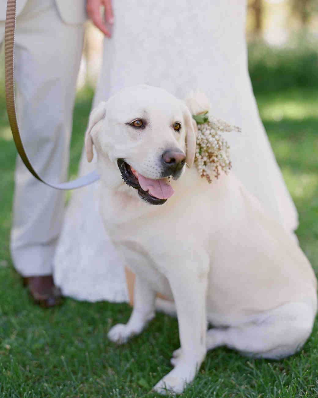 Fancy Dog Carrying Wedding Rings Ensign The Wedding Ideas