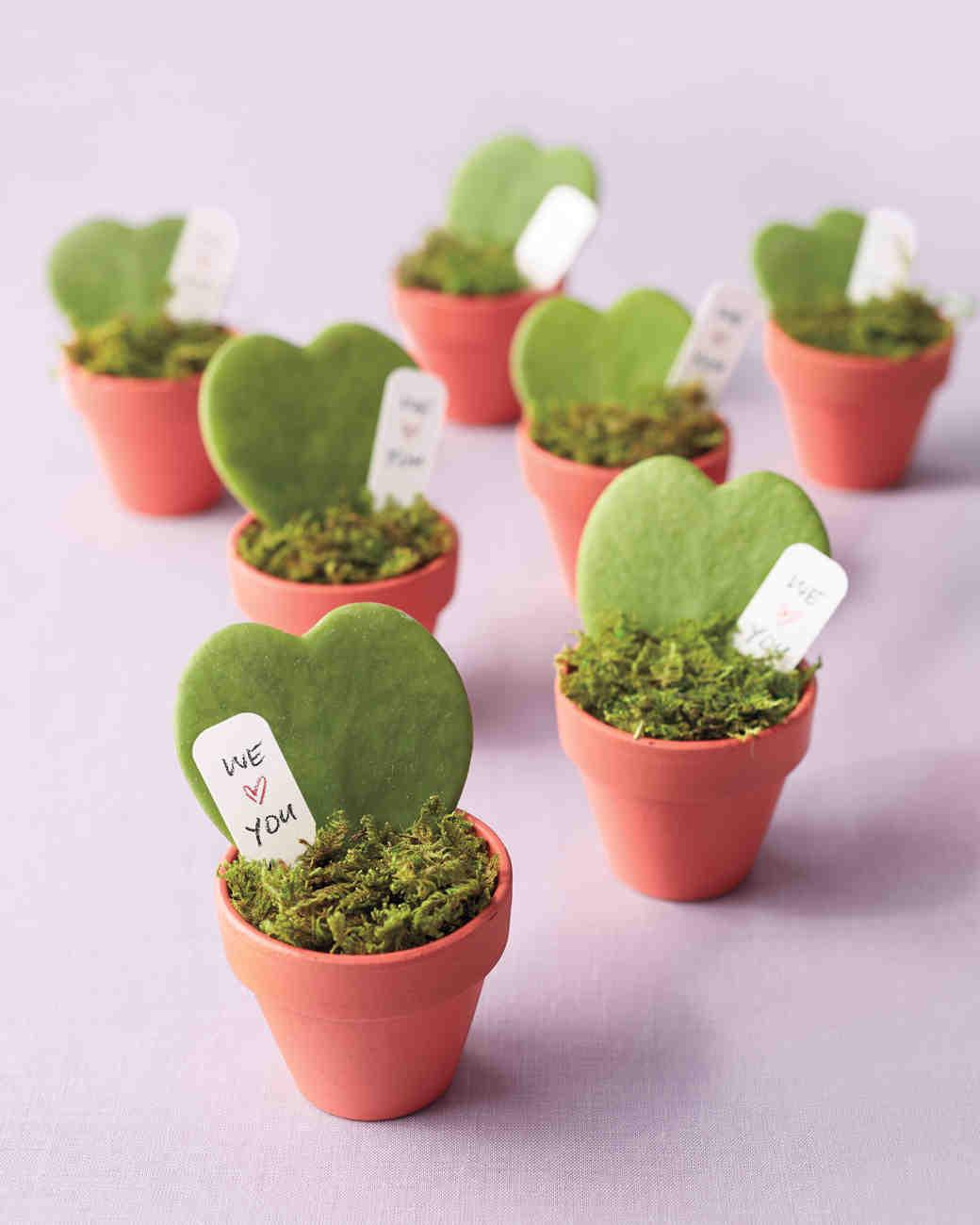 hoya-plants-005-d111375.jpg