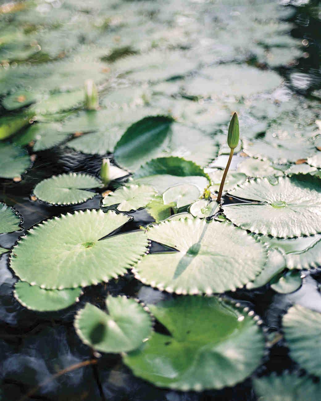 lo-wong-lotus-mwds109374.jpg