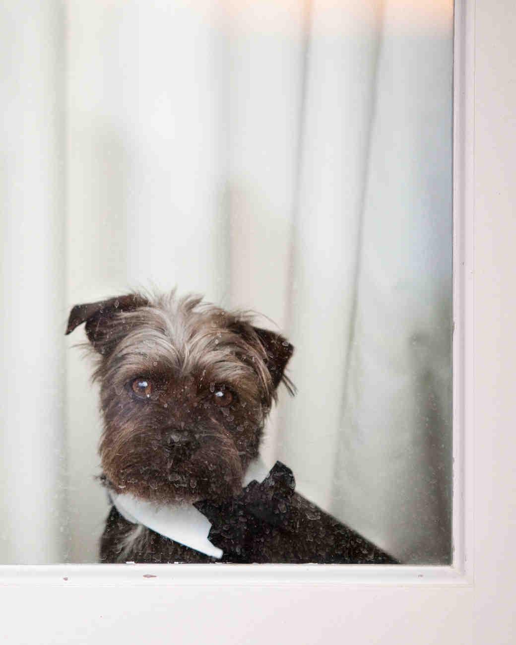 bow-ties-dogs-bosley-0814.jpg