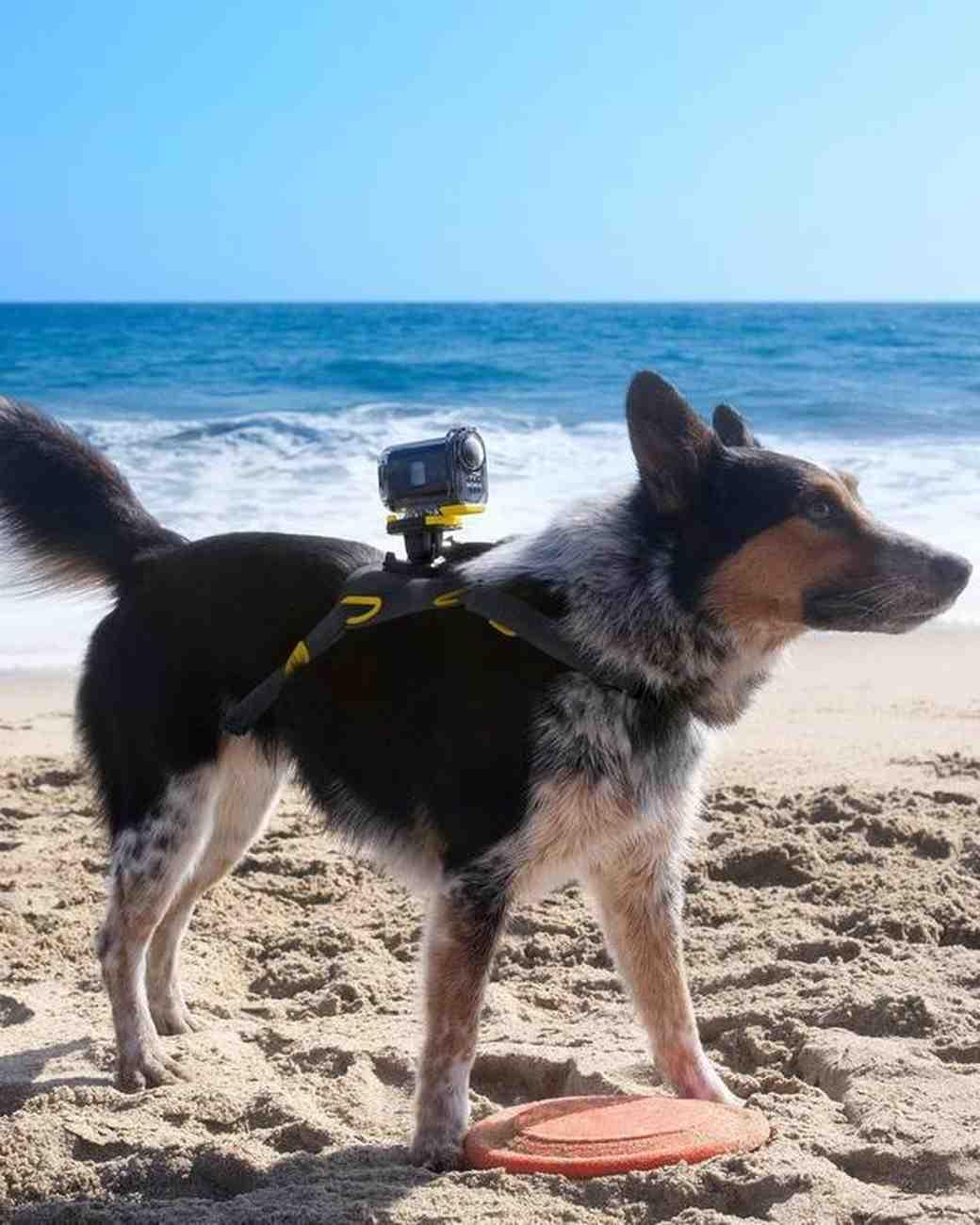 dog action camera