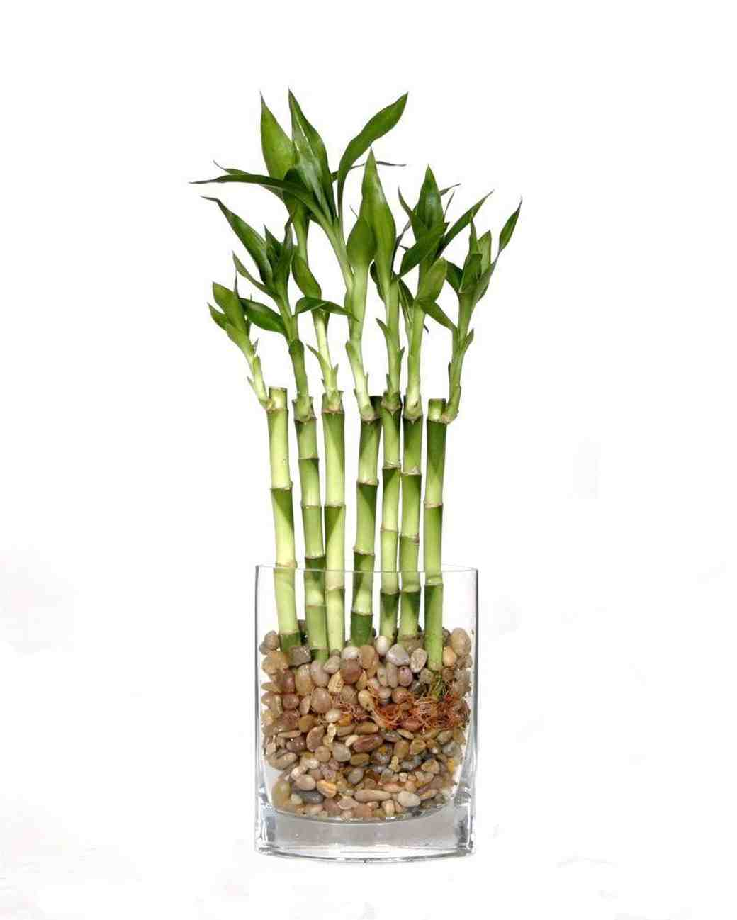 12 good luck gifts for the bride and groom martha stewart weddings lucky bamboo buycottarizona