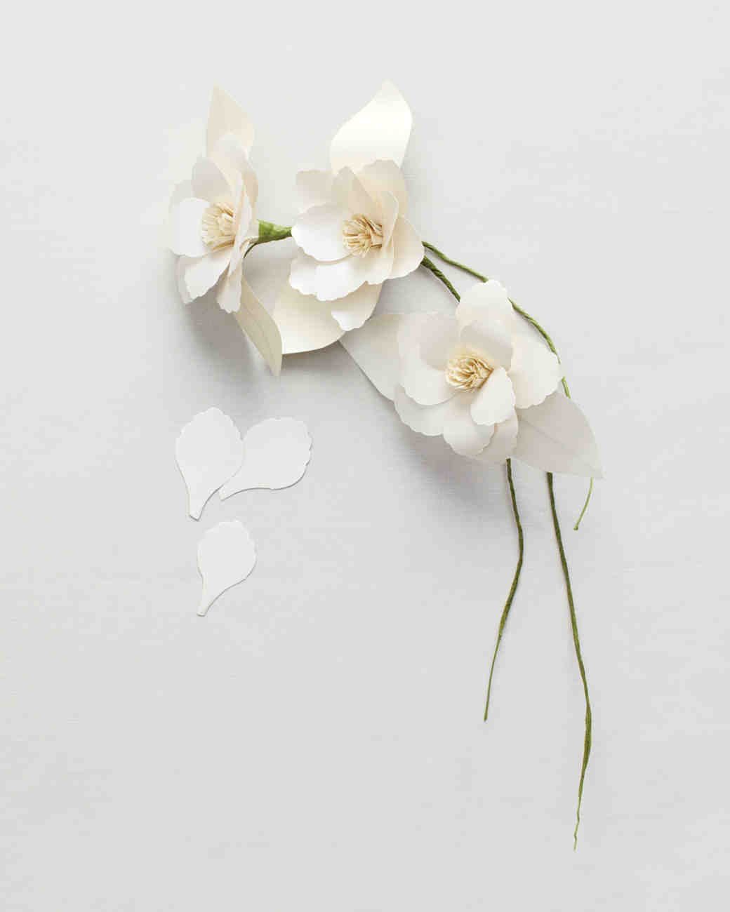 paper-flowers-gt-mwd107748.jpg