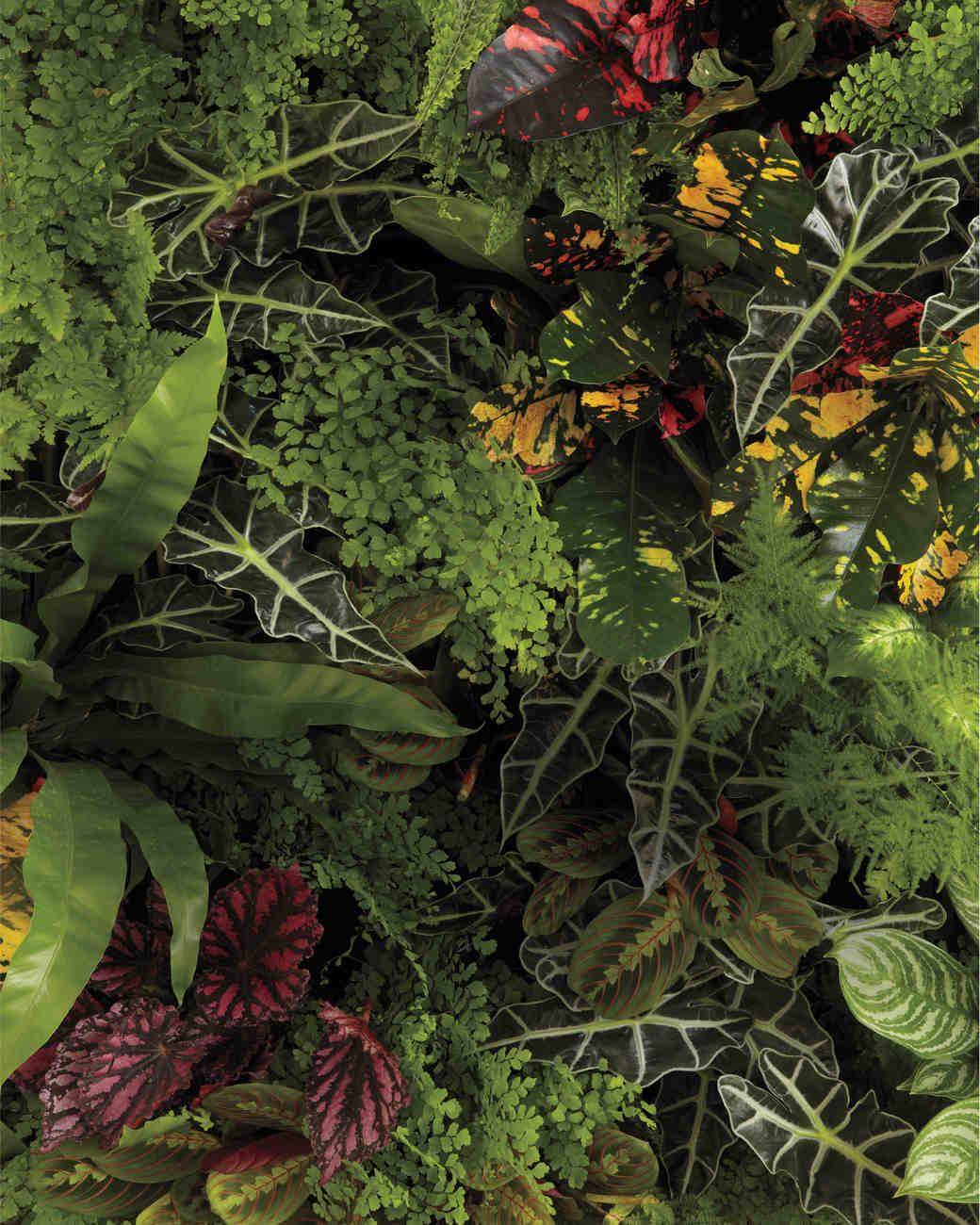 plants-wall-9523-mwd110013.jpg