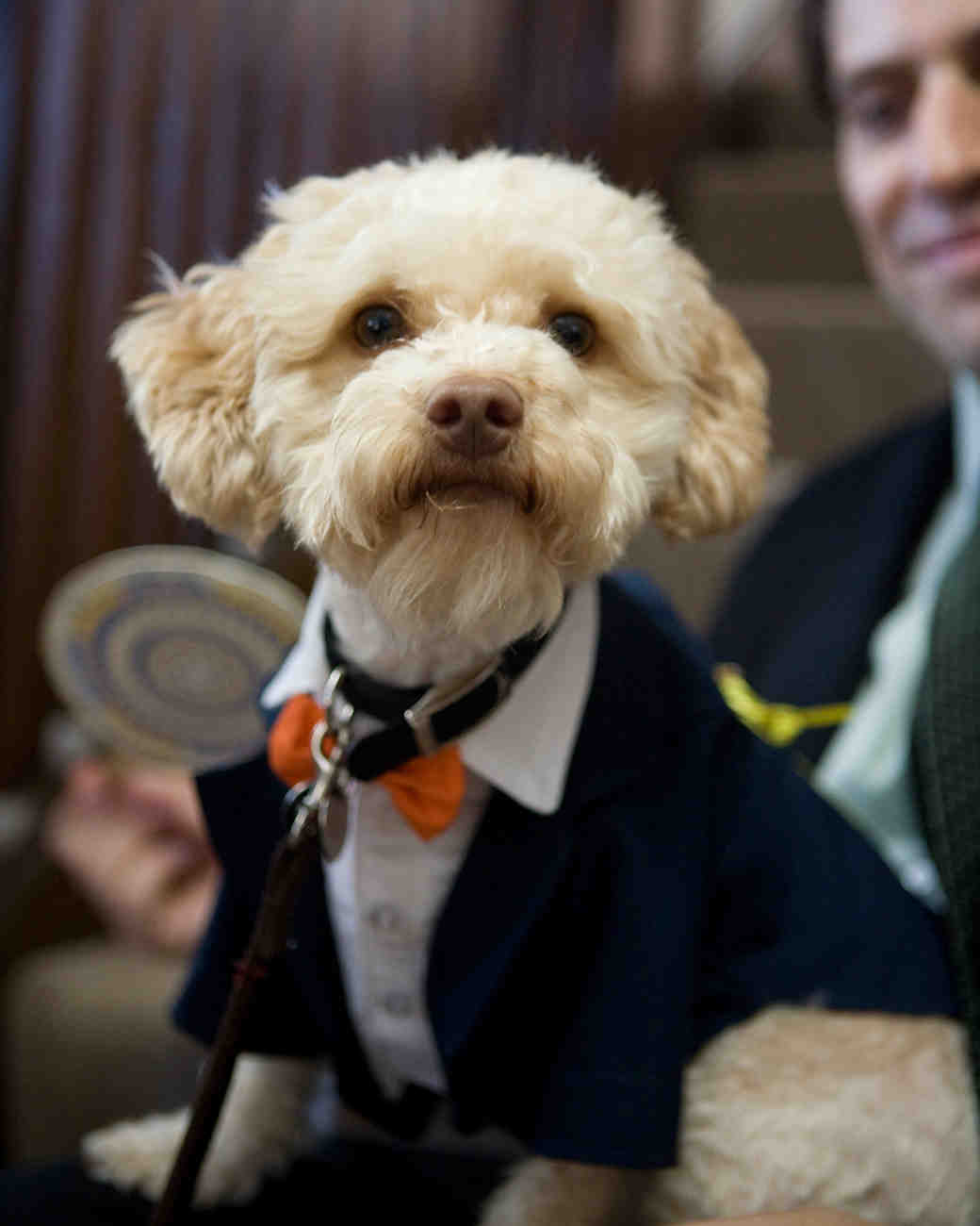 9 Dapper Dogs Wearing Bow Ties at Weddings | Martha Stewart Weddings