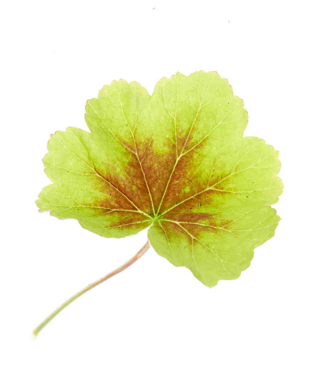 flower-glossary-geranium-0415.jpg