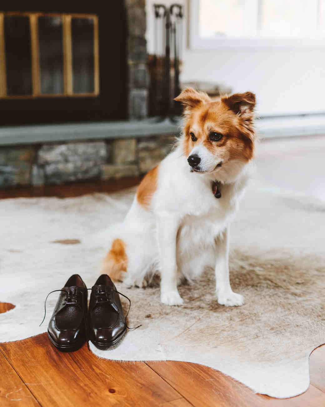 dog wedding rug groom's shoes