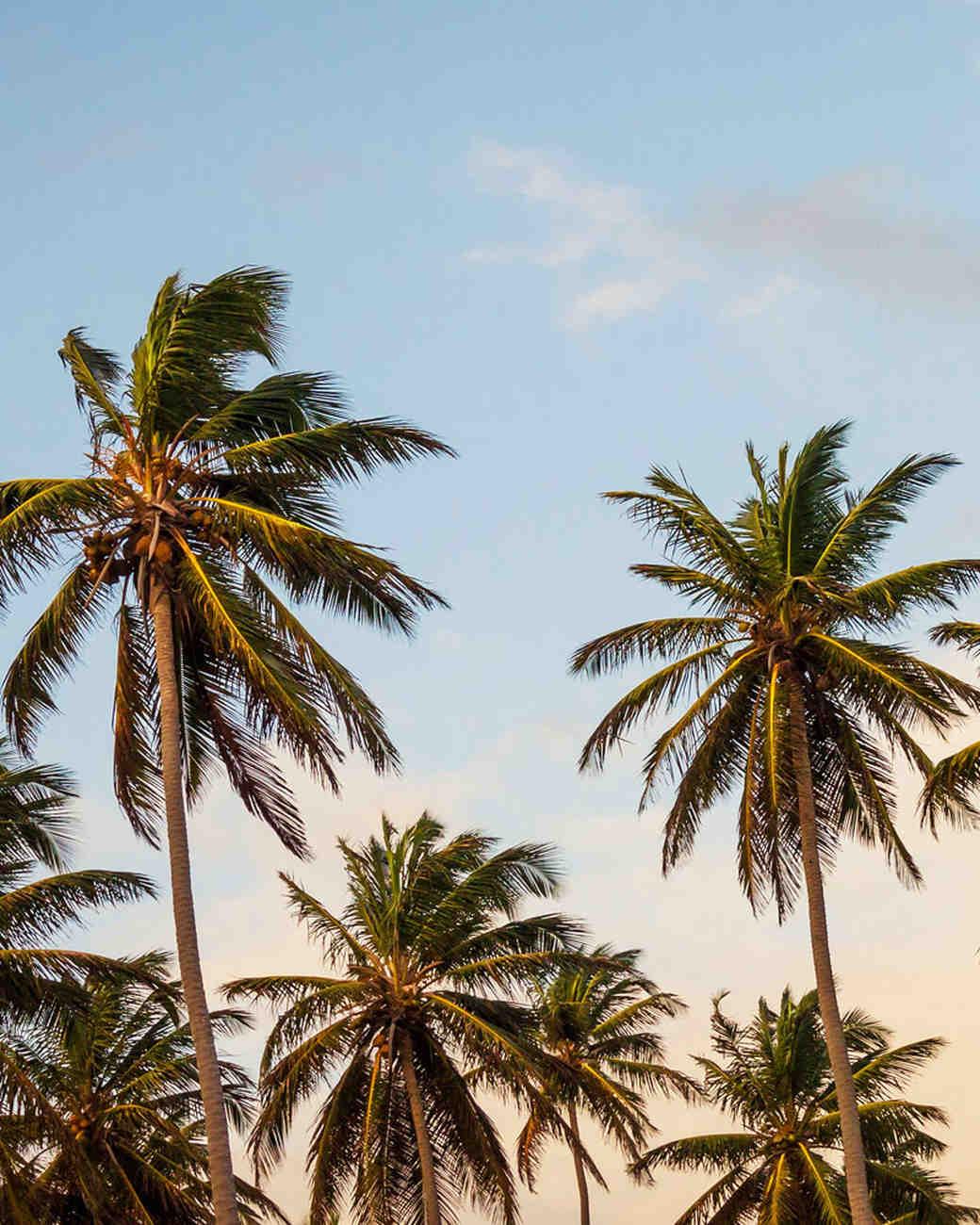 palm-trees-weekend-getaway-0216.jpg