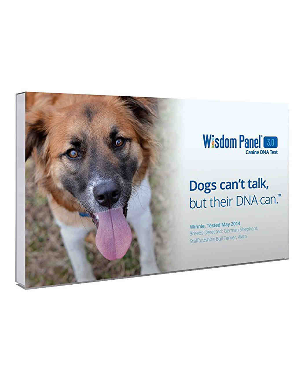 pet gift guide wisom panel