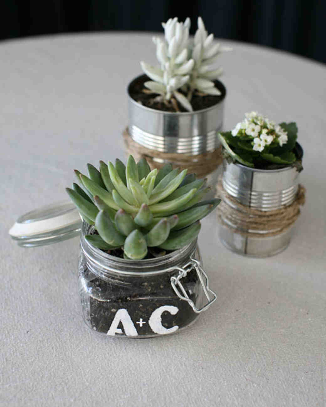 canned succulents