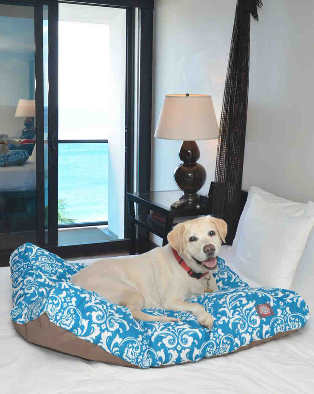 tideline pet friendly hotel