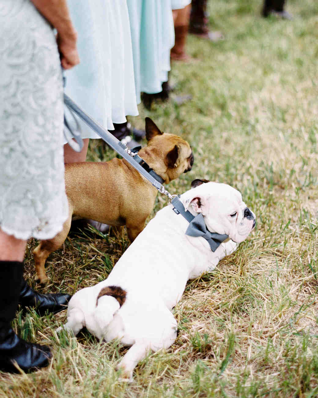 35 Ways To Ensure Your Dog Is The Guest Of Honor At Wedding Martha Weddings