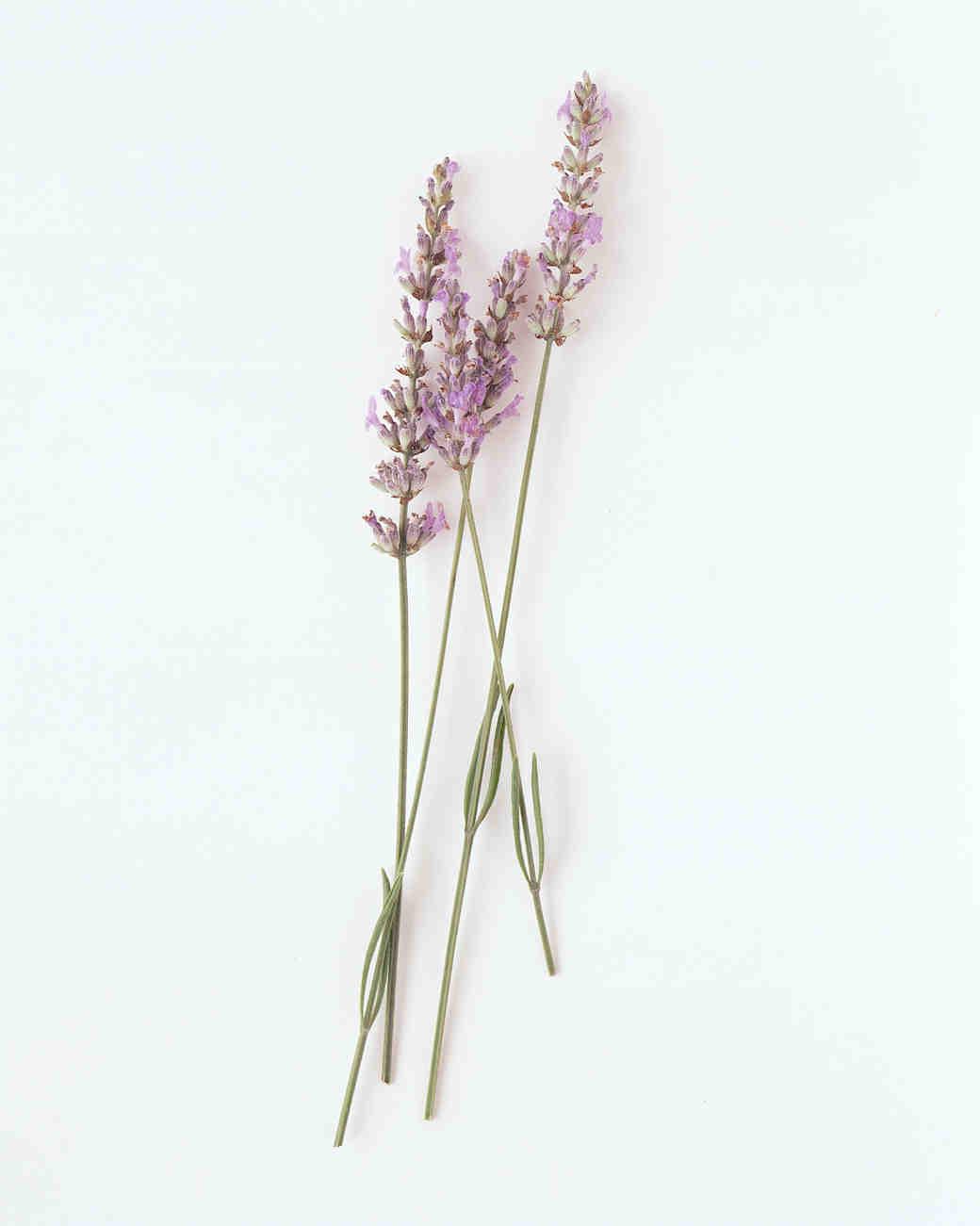 flower-glossary-lavender-a98432-0415.jpg