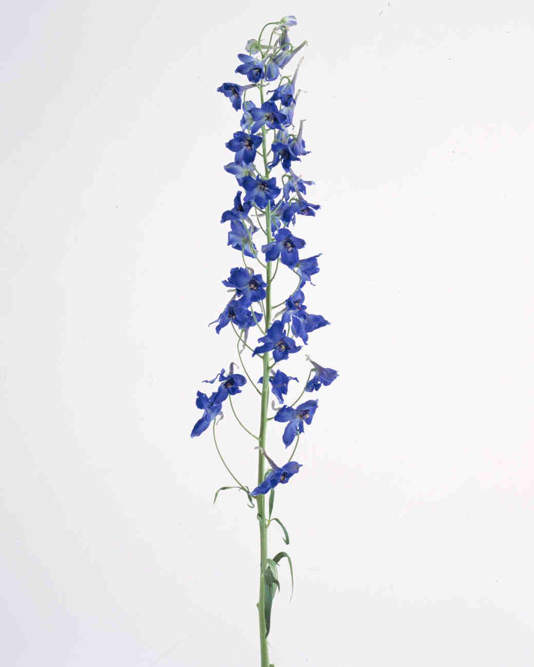 flower-glossary-delphinium-a98432-0415.jpg