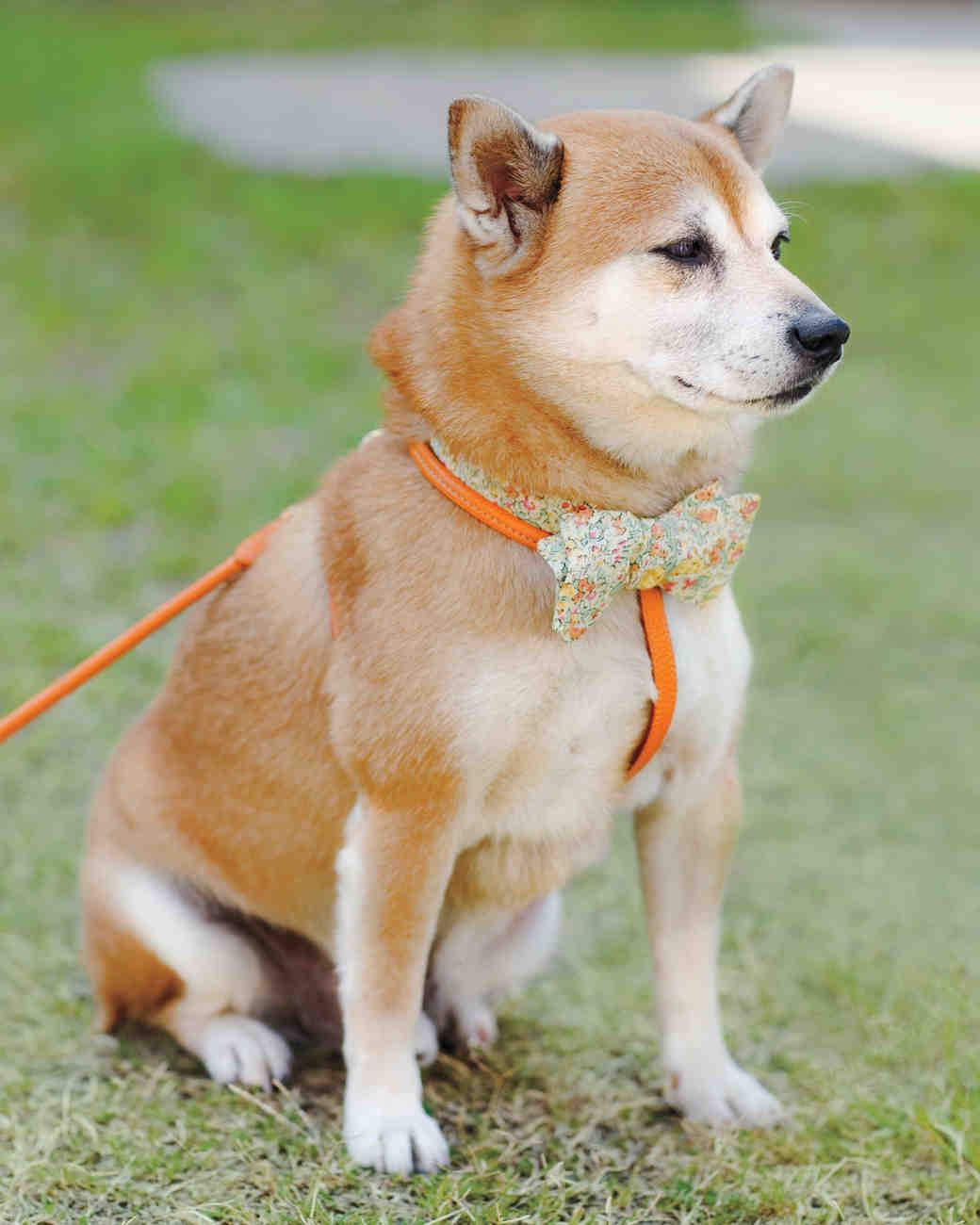 maggie-bryan-dog-atilla-0019-mwd108897.jpg