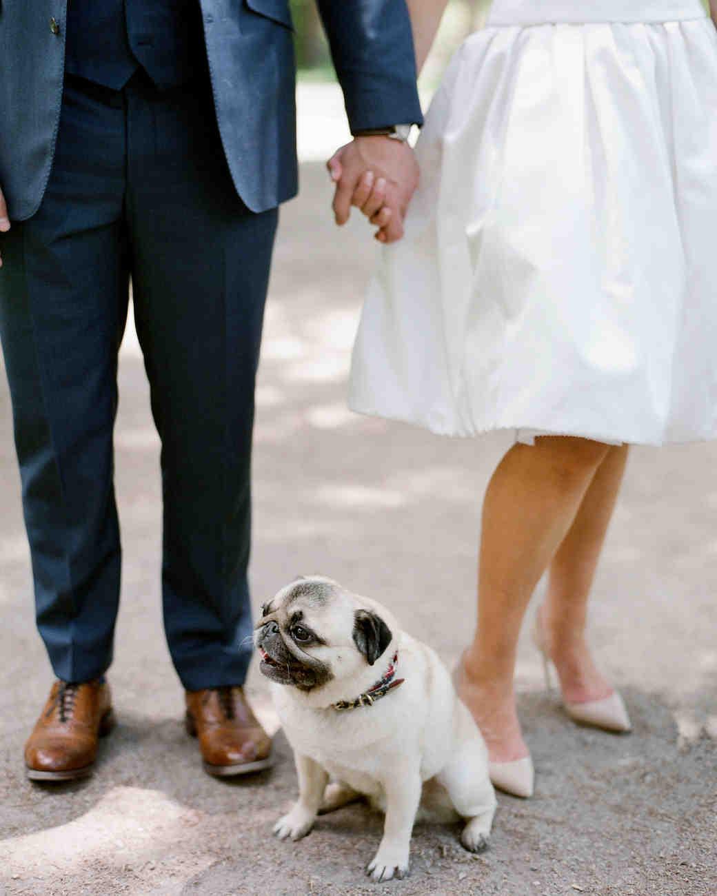 stacey-eric-wedding-dog-12-s111513-1014.jpg