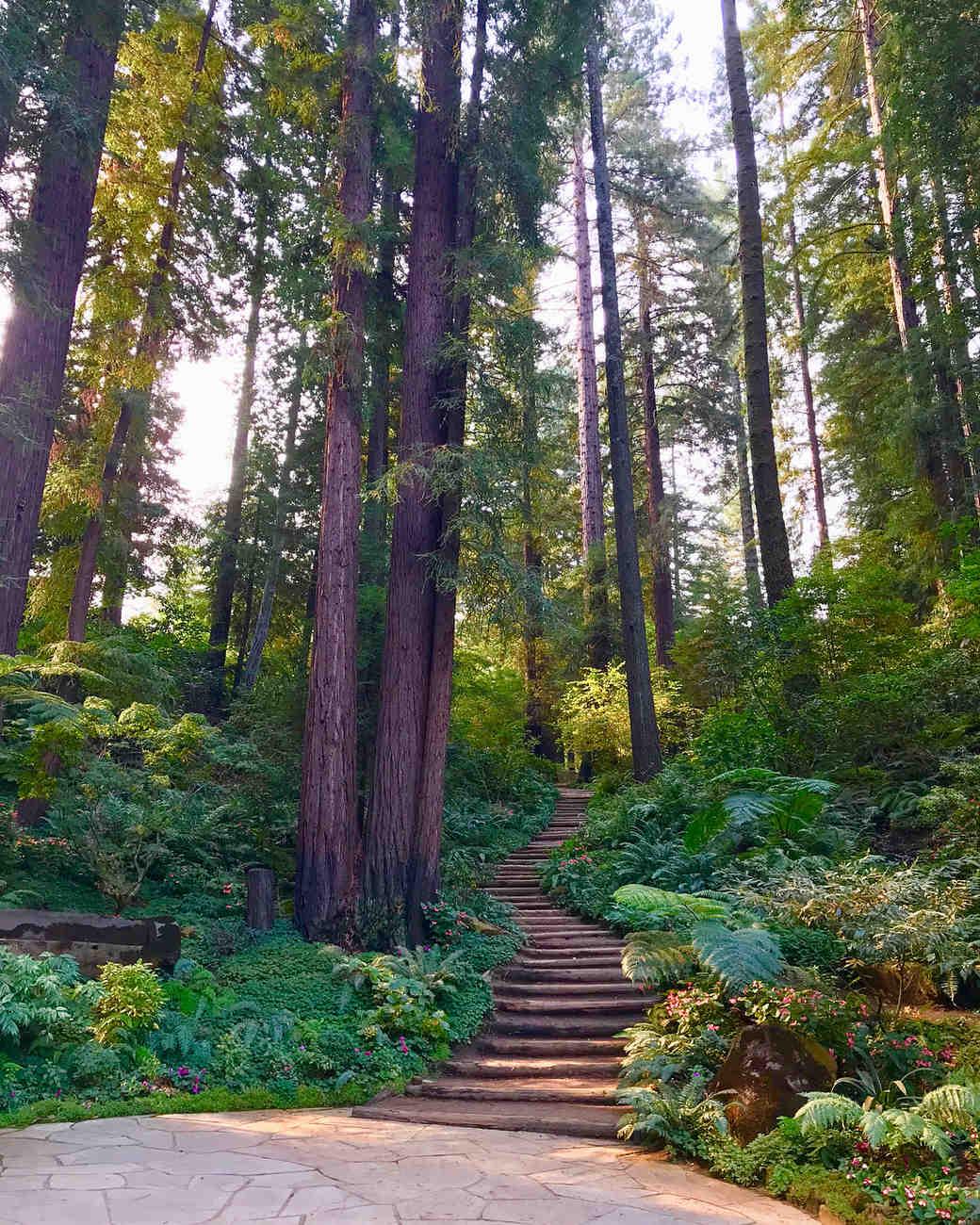 nestldown tree ceremony site