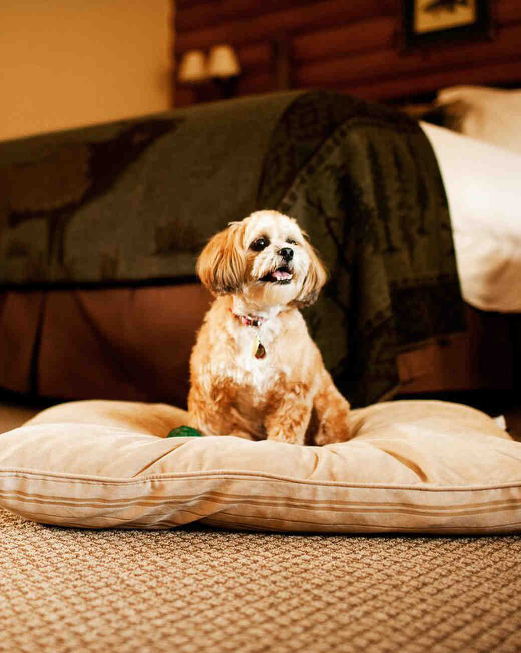 Emerson Resort Spa Pet Friendly Hotel