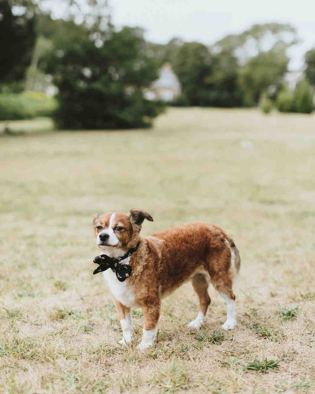 hadley corey wedding dog