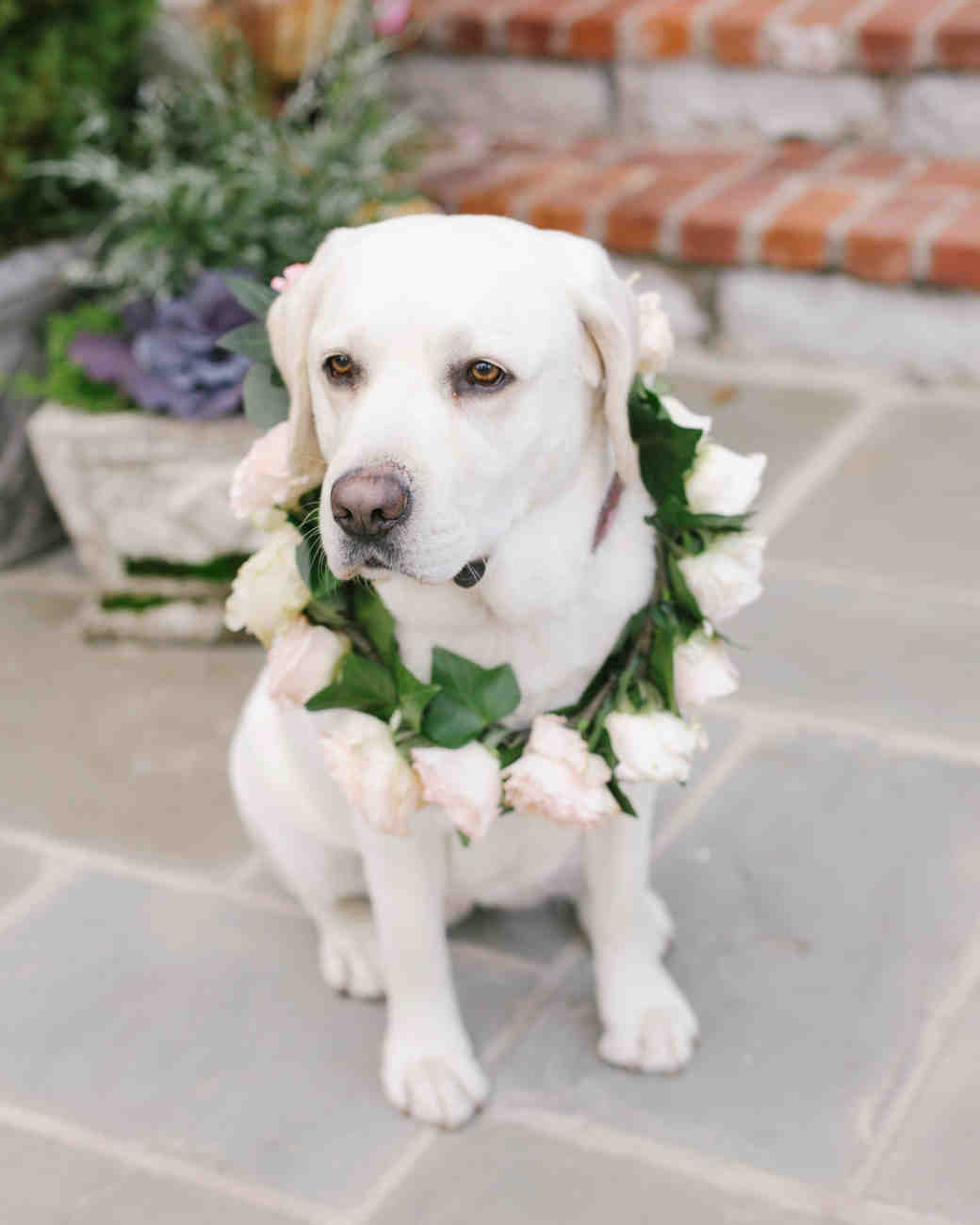 Floral Wreath for a Dog