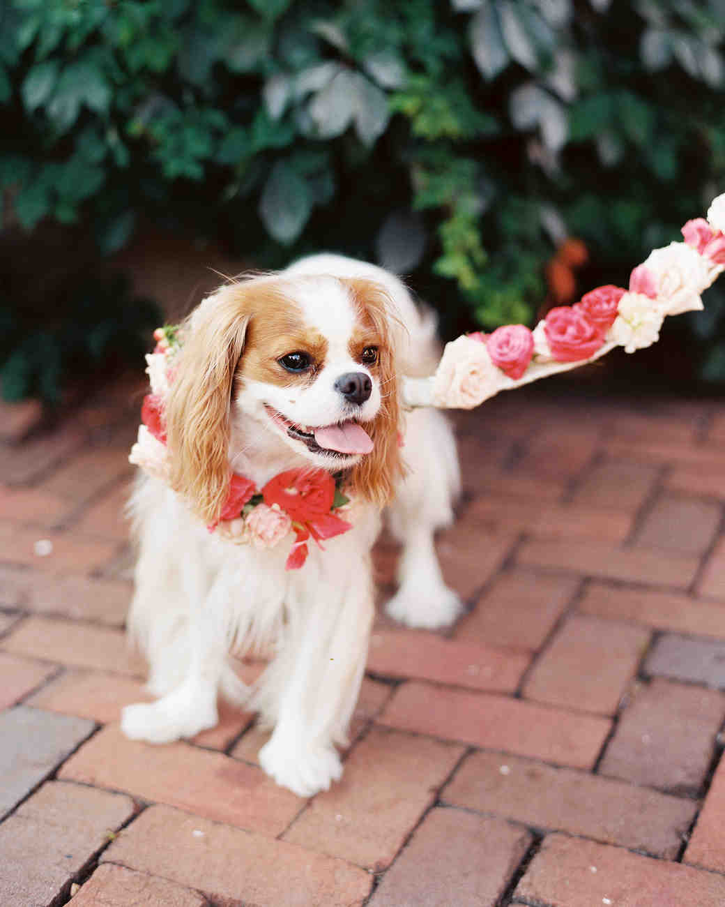 Flower Dog Collar and Leash