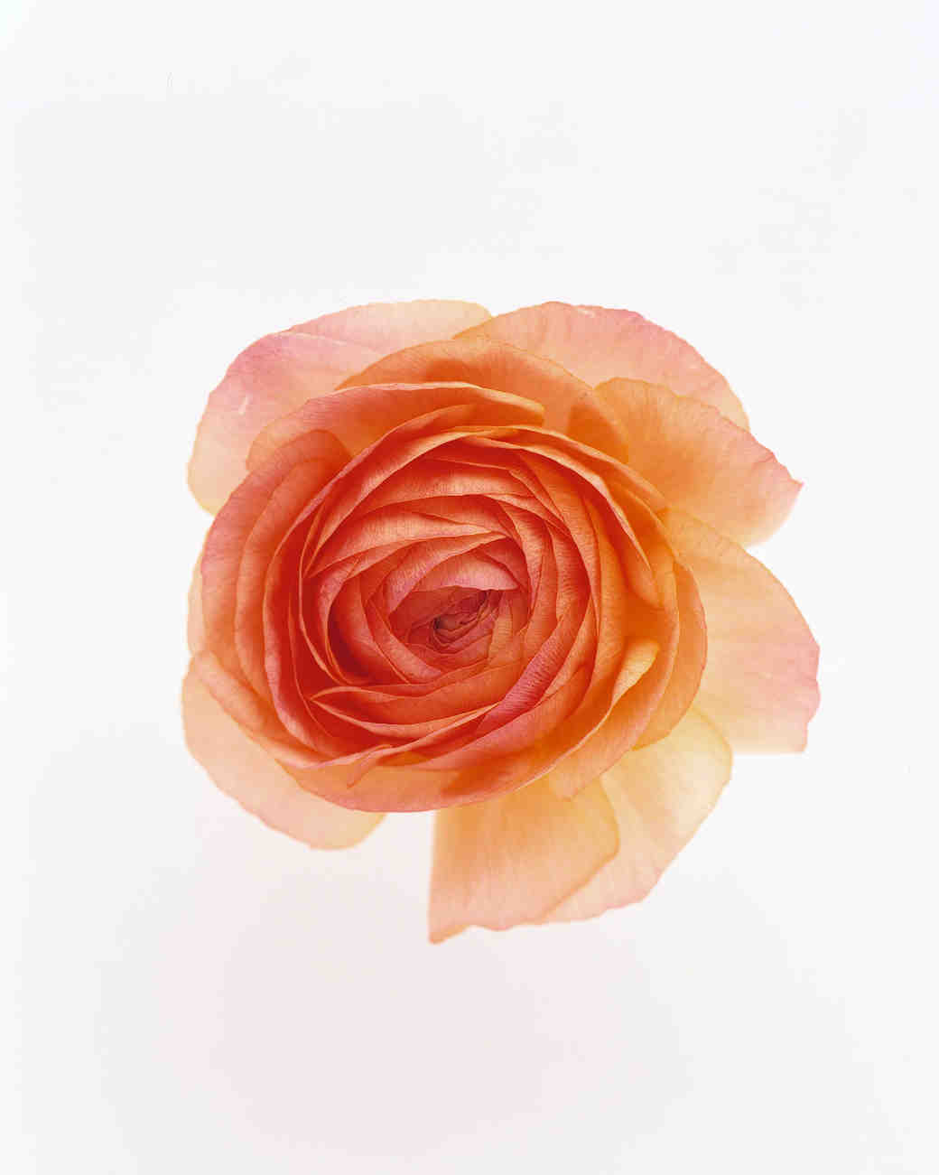 flower-glossary-ranunculus-peach-a98432-0415.jpg