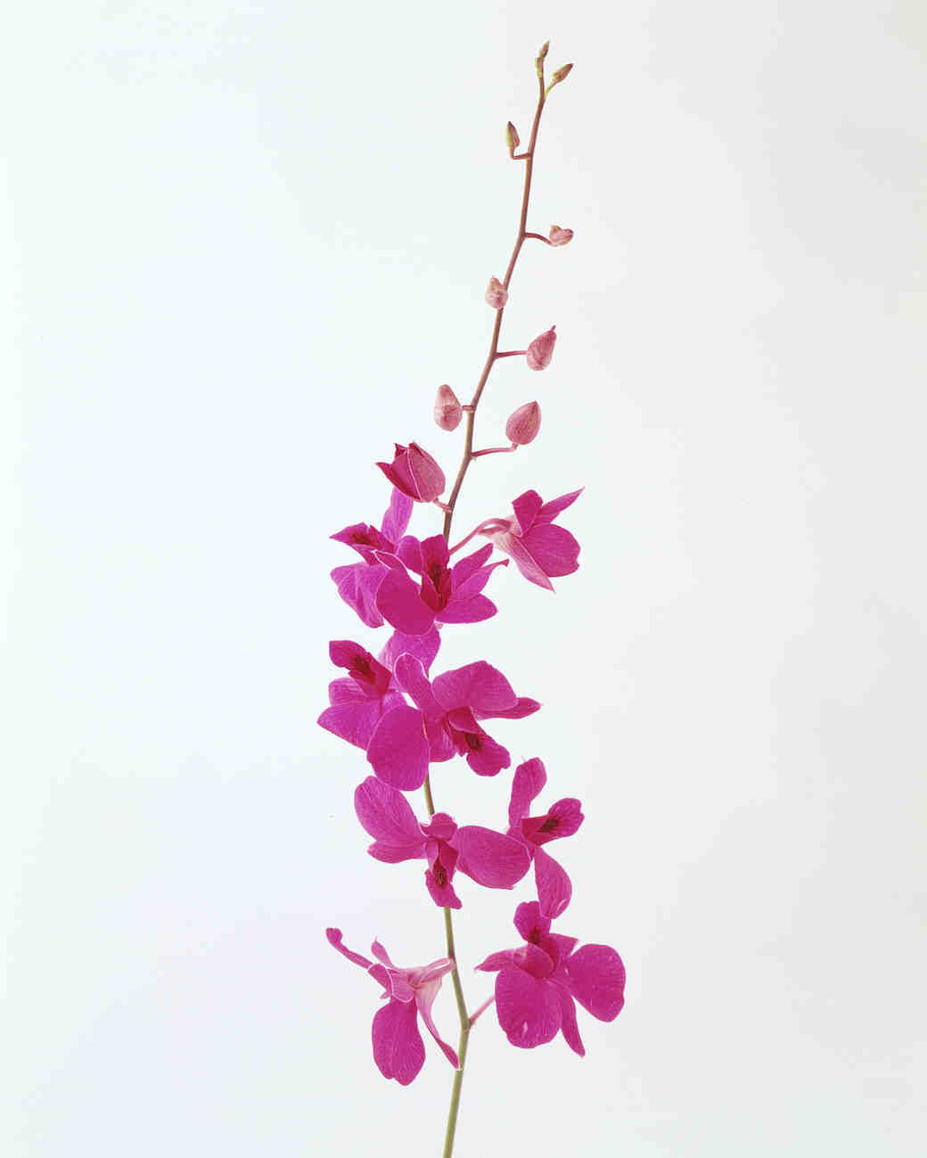 flower-glossary-demor-orchid-pink-a98432-0415.jpg