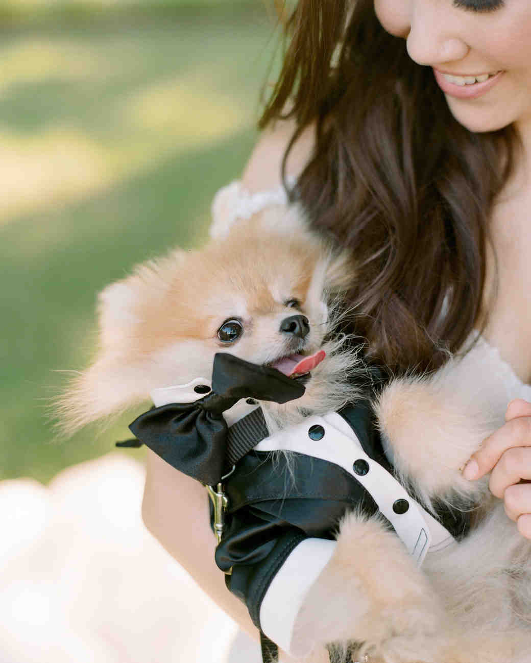 texas wedding small dog tux cuddle