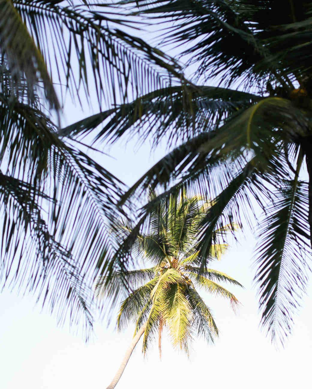 olivia-keith-wedding-palm-tree-74-s112304-0815.jpg