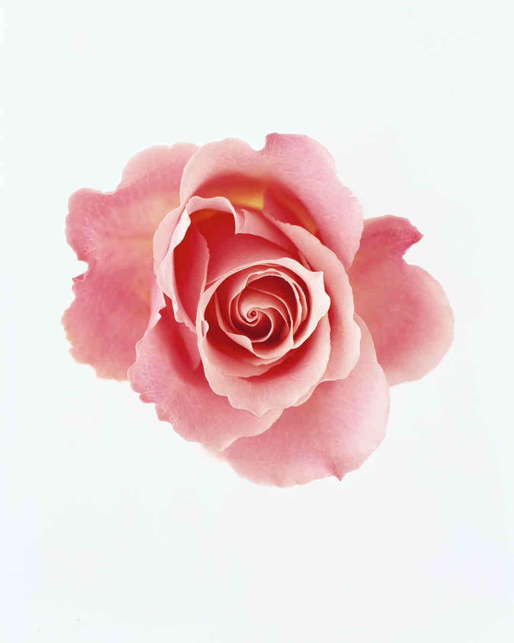 The Meaning of Rose Colors | Martha Stewart Weddings