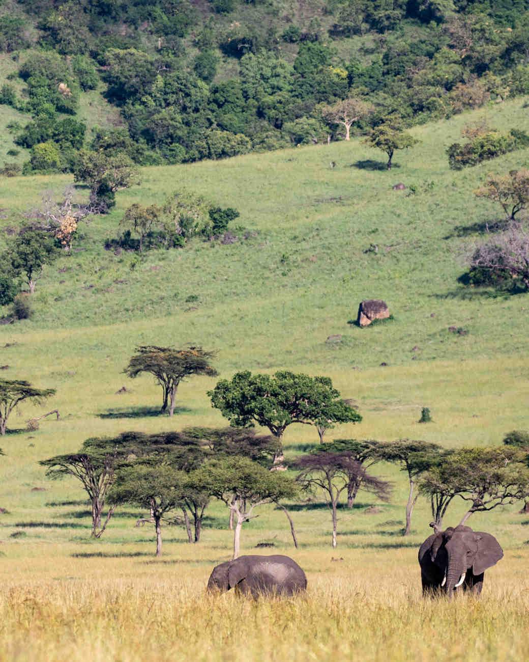 kenya maasai mara elephants